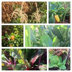 Some of the plants we have growing in the garden for September 2014.