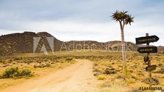 Stock Footage of A static timelapse of a gravel road with rocky mountains in the background, a and tourist road sign next to a quiver tree on an overcast day available on request. Explore similar videos at Adobe Stock Mountain Background, Quiver, Stock Video, Rocky Mountains, Stock Footage, Monument Valley, 4x4, Trees, Sign