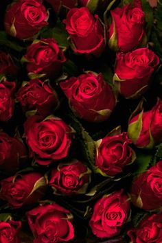 roses-wonderland
