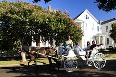 Take a carriage ride while taking in the scenery and history with a tour guide onboard. #visitnatchez #mississippi #natchez300