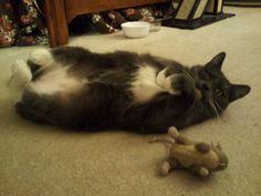Predator imitating prey cute cat SO CUTE