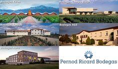 Pernod Ricard Bodegas renueva su certificado IQNet SR10 https://www.vinetur.com/2015012017940/pernod-ricard-bodegas-renueva-su-certificado-iqnet-sr10.html
