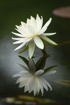 Flower in dream Flower
