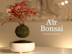 その発想はなかった。宙に浮かんで回転する盆栽「Air Bonsai」 | IDEA HACK