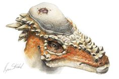 Butting Heads Over Skull Injuries and Dinosaur Head-Butts