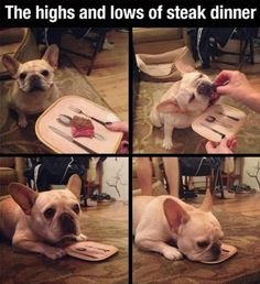 Funny pictures about The highs and lows of steak dinner. Oh, and cool pics about The highs and lows of steak dinner. Also, The highs and lows of steak dinner. Funny Dogs, Cute Dogs, Funny Animals, Cute Animals, Charles Darwin, Funny Shit, Hilarious, Funny Stuff, Oui Oui