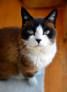 """""""Cats seem to go on the principle that it never hurts to ask for what you want."""" --Joseph Wood Krutch"""