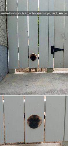Pug Fence Hole.