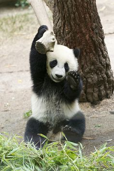 Yun Zi practices for the 2010 Pandalympics | Flickr - Photo Sharing!