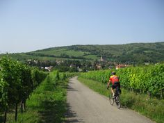 Vineyards and small towns in Alsace on the way to Riquewihr, France #bicycle #travel