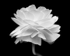 Flower Photography Black And White Wall Art Fine Art by BreeMadden,