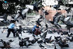 Te presentamos la selección del día: <<CARAQUEÑOS>> en Caracas Entre Calles. ============================  F E L I C I D A D E S  >> @brankozs << Visita su galeria ============================ SELECCIÓN @teresitacc TAG #CCS_EntreCalles ================ Team: @ginamoca @huguito @luisrhostos @mahenriquezm @teresitacc @marianaj19 @floriannabd ================ #caraqueños #Caracas #Venezuela #Increibleccs #Instavenezuela #Gf_Venezuela #GaleriaVzla #Ig_GranCaracas #Ig_Venezuela #IgersMiranda…