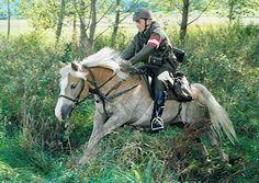 Haflinger Horse, Draft Horses, Military History, Law Enforcement, Hero, Austria, Animals, Google, Rpg
