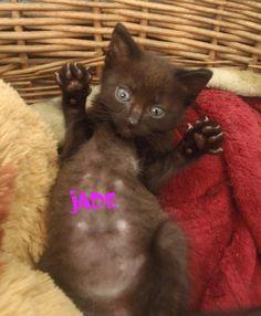 Ecole Chat Quiberon   JADE chatonne noire une vraie chipie A adopter #chaton #perlenoire #adoption #bretagne http://leschatsdequiberon.forumactif.org/t1835-jade-a-reserver … pic.twitter.com/LGdUrP8aSE