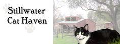 Stillwater Cat Haven