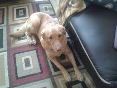 Molly Dogs, Animals, Animales, Animaux, Pet Dogs, Doggies, Animal, Dog, Animais