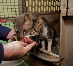 Learn how PetSmart Charities is making great strides in reducing the amount of free-roaming cats in the United States