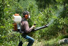 Услуги по обработке сада от вредителей и болезней.