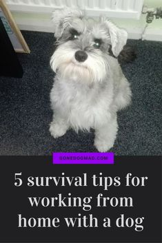 5 tips to keep pup busy when you need to get s**t done! #dogcaretips #workingfromhometips via @KaufmannsPuppy