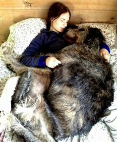 Top 10 Largest But Affectionate Dog Breeds
