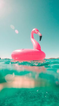 Pink Flamingo iPhone Wallpaper
