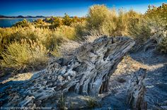 Sand Tufa, Brush, Lake, HDR