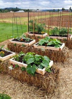 Ideas Garden Beds Ideas Straw Bales The Article For You Personally If You Like gardening for beginners Don't Ignore These Guidelines Hay Bale Gardening, Strawbale Gardening, Container Gardening, Hydroponic Gardening, Backyard Vegetable Gardens, Veg Garden, Vegetable Garden Design, Vegetable Ideas, Garden Planters
