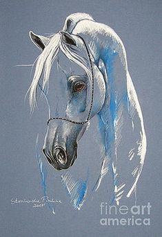 Artist Directory : Arabian horse by Paulina Stasikowska Horse Drawings, Animal Drawings, Art Drawings, Painted Horses, Horse Illustration, Horse Artwork, Horse Sculpture, Equine Art, Pastel Art