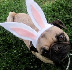EASTER BUNNY dog or cat hat fits all sizes by ilickyou on Etsy, $12.00