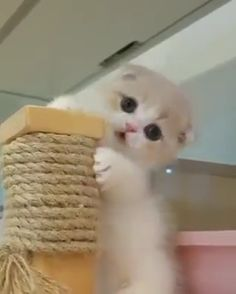 Watch more videos click in VisitFor Watch more videos click in Visit Cute Baby Cats, Cute Cat Gif, Cute Little Animals, Cute Cats And Kittens, Cute Funny Animals, Kittens Cutest, Funny Cats, Cute Babies, Ragdoll Kittens