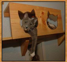 Cat shelf shelving from www.thecatcarpenter.com/