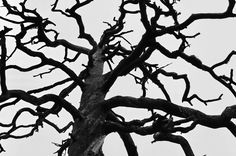 Branches | da pekvaha