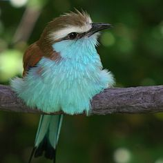 gsfrenchshabbylife:  powderpuff blue http://www.flickr.com/photos/jakig/176205165/#