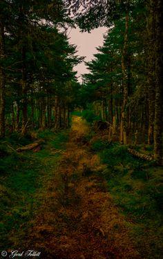 The Path by gord follett on 500px