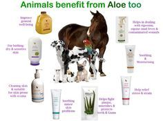 We also do PET CARE! Forever Livings products has created Aloe Veterinary Formula - Mother Natures soothing Aloe spray for animals. Aloe Veterinary Formula is made with stabilised Aloe Vera gel as its primary ingredient and is ideally suited for external skin problems. The nozzle-control spray makes application to any size or type of pet easy. Aloe Veterinary spray can provide quick and easy relief. ✅ high concentration of Aloe Vera ✅ multi purpose product