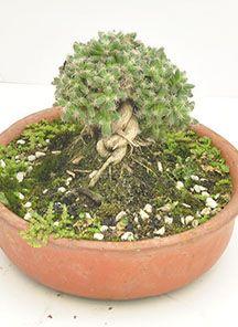 Html, Cactus, Plants, Space, Plant, Planets