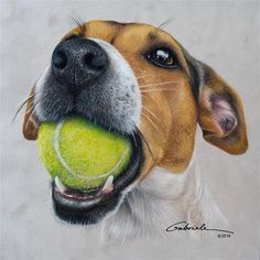 "lets play ball!"" - Original Fine Art for Sale - © Gabriele Kolb Animal Sketches, Animal Drawings, Colored Pencil Artwork, Colored Pencils, Reference Photos For Artists, Color Pencil Sketch, Realistic Drawings, Realistic Paintings, Dog Portraits"