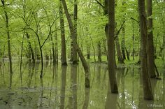 green silence - flooded forest in nature reserve Latorický luh, Protected Landscape Area Latorica Central Europe, Bratislava, Nature Reserve, Mother Earth, Hungary, Landscape, Forests, City, Places