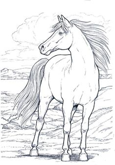 cavallo_11 disegni da colorare per adulti
