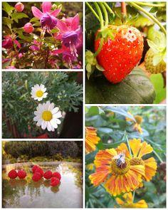 MAMY do pogadania: Kwiaty i owoce