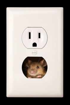If mice are outsmarting you and setting up house in your home, you'll want to read these tips for getting rid of them once and for all. | Photo: James Brey/Getty | thisoldhouse.com