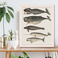 Whale poster - Five vintage whales and narwhal, Whale print Nautical print sea picture beach house decor wall decor marine painting nautical