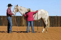 Clinton Anderson: De-Spook, De-Stress, Desensitize Your Horse