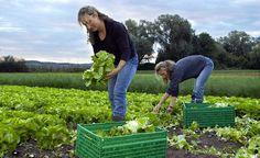 Appello per salvare l'agricoltura italiana - PAOLO FERRARESE