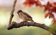 Cute sparrow🐦 . . . #bird #birds #naturelovers #naturehippys #naturegram #nature_seekers #natureshots