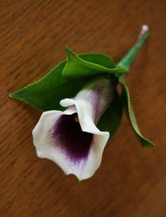 calla lilies buttonholes - Google Search