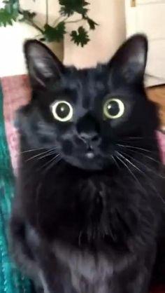 Funny Animal Jokes, Funny Animal Videos, Cute Funny Animals, Animal Memes, Funny Cats, Cute Baby Cats, Cute Little Animals, Animals And Pets, Wild Animals