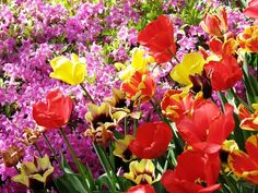 List of Flowers Names A to Z
