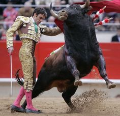 """Spanish-style bullfighting is called a corrida de toros (literally a """"running of bulls""""), or fiesta brava[citation needed] and is practiced in Spain and Mexico, Colombia, Ecuador, ). Bullfighting season in Spain runs from March to October"""
