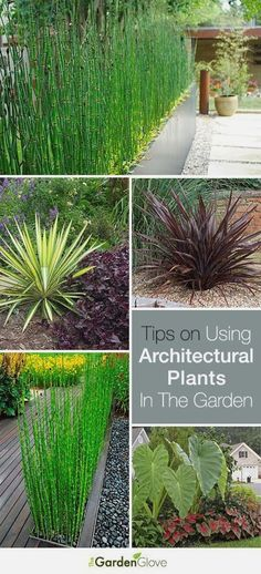 Outdoor Garden Design Using Architectural Plants in the Garden Great info and Tips!Outdoor Garden Design Using Architectural Plants in the Garden Great info and Tips! Outdoor Plants, Garden Plants, Outdoor Gardens, Garden Soil, Garden Trees, Small Gardens, House Plants, The Secret Garden, Architectural Plants